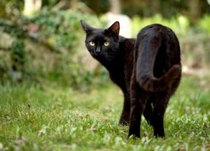 Symbolbild: Schwarze Katze