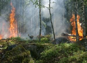 Symbolbild: Waldbrand