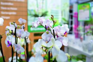 Gutscheinshop Dehner Gartencenter