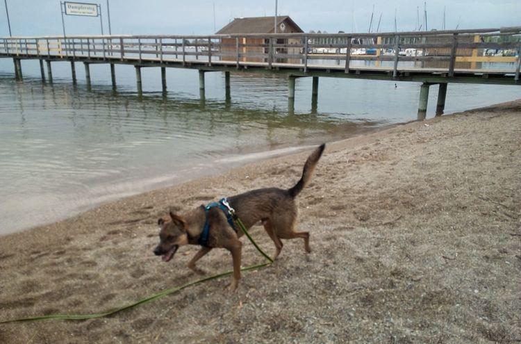 25102019 Hund Beni