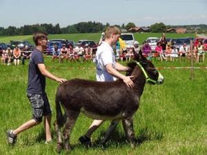 Pfingstfest Holzhausen