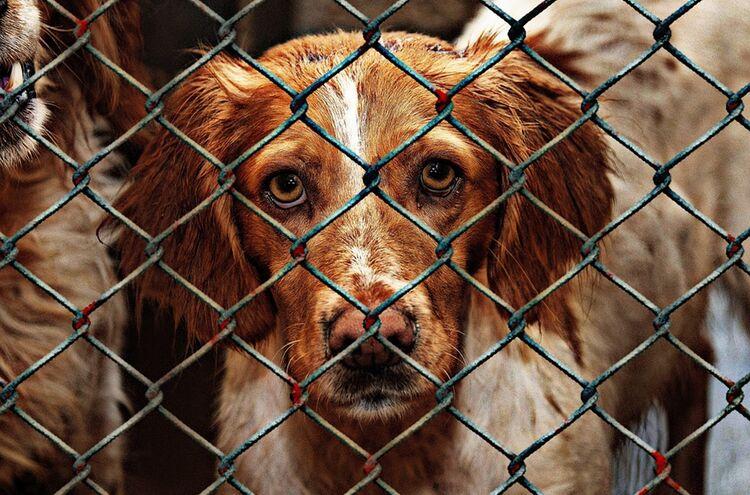 Animal Welfare 2016