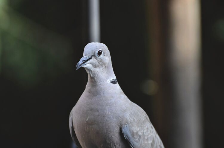 Bird 5898064 1920