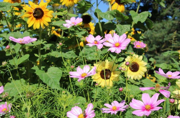 Blumenwiese 1