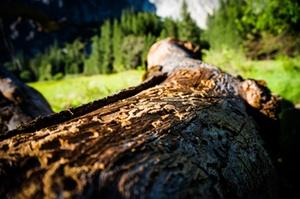 Borkenkäfer Wurfholz