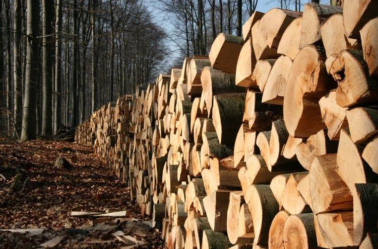 Brennholz Symbolbild 2