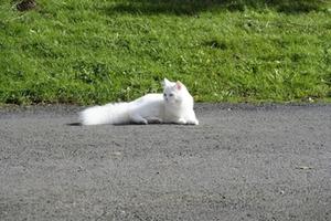 Katze weiß Symbolbild