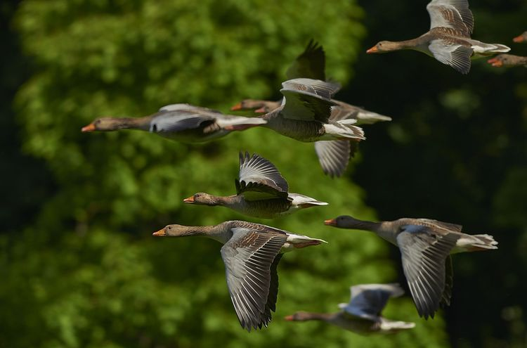 Flock Of Birds 350290 1280