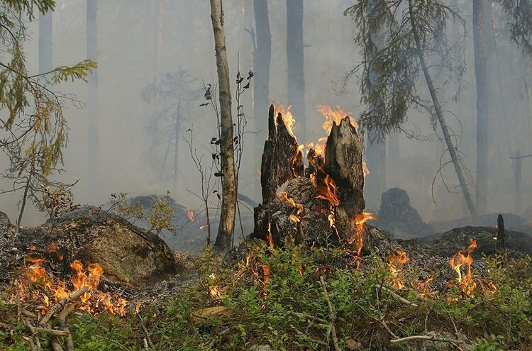 Forest Fire 432877 1280