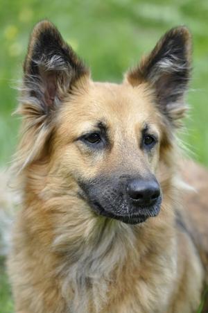 hund-2.jpg