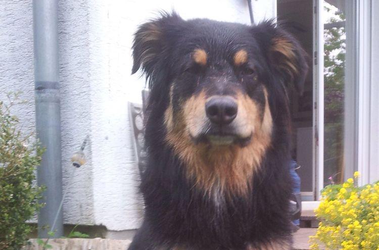 Hund Bruno Siegsdorf2