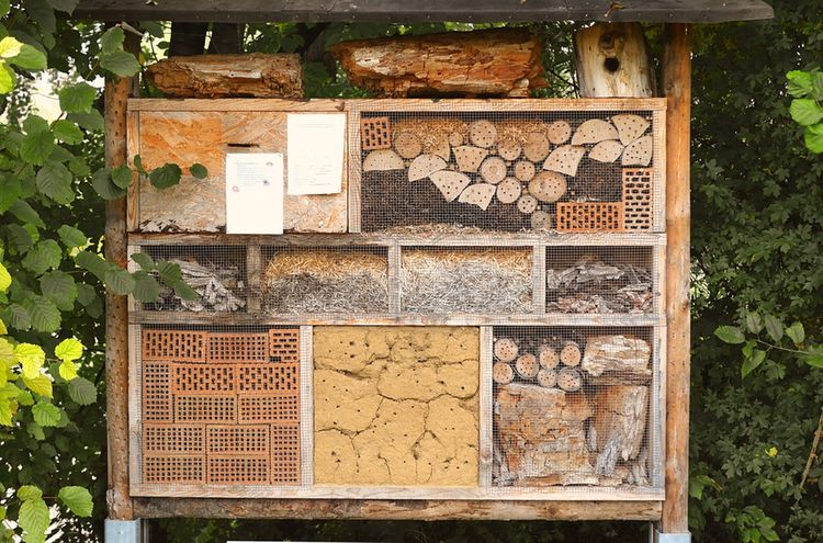 Insect House 1778906 1280