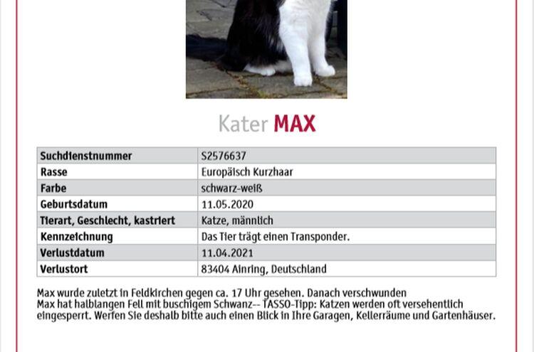Kater Max
