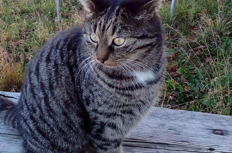 Katze 1 1