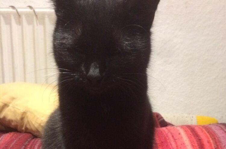 Katze 9