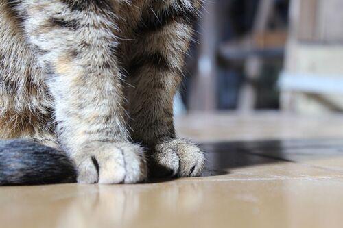 Katze Gesuchtjpg