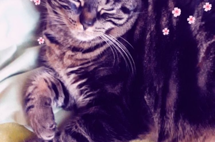 Katze Sissi