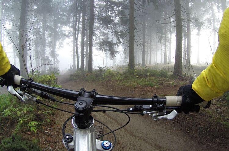 Mountainbiker Wald