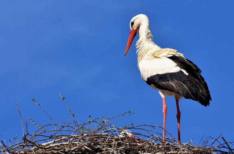 Stork 2308235 1280