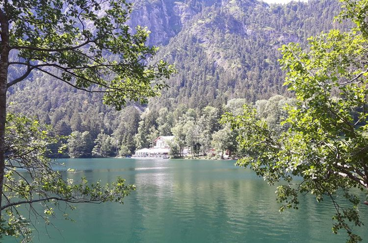 Thumsee2