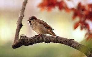 vogel-symbolfoto