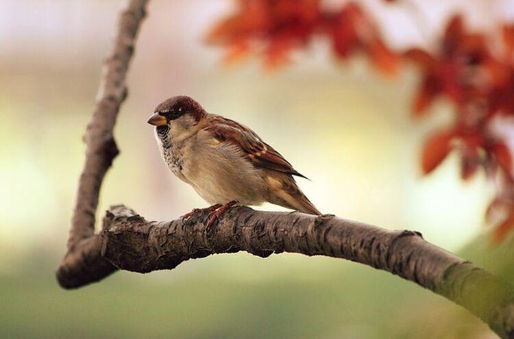 Vogel Symbolfoto