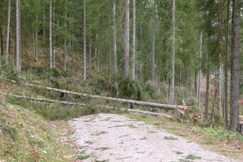 Windwurf Wald