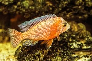 zierfisch-aquarium